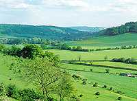 The Chiltern Hills in summer (it's quite green even in winter)